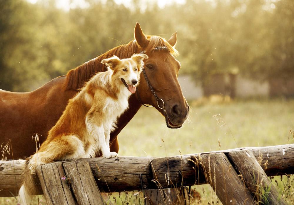Salud animal