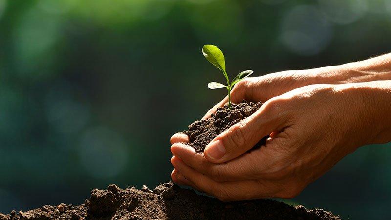 Equilibrio ecológico y salud humana