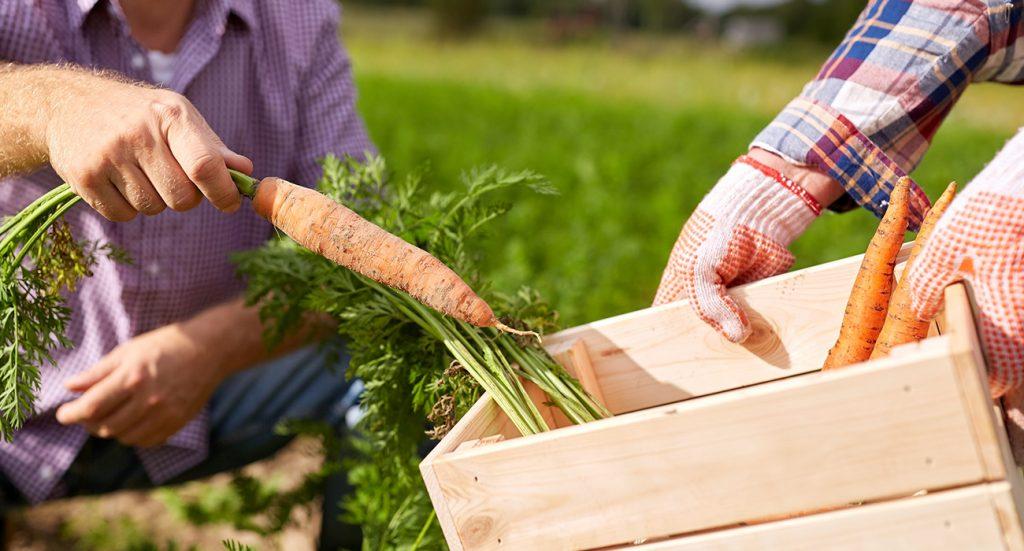 Alimentos orgánicos vrs alimentos convencionales