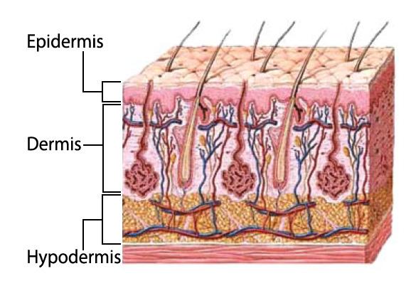 Epidermis, cáncer de piel